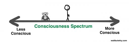 4-consciousness-spectrum